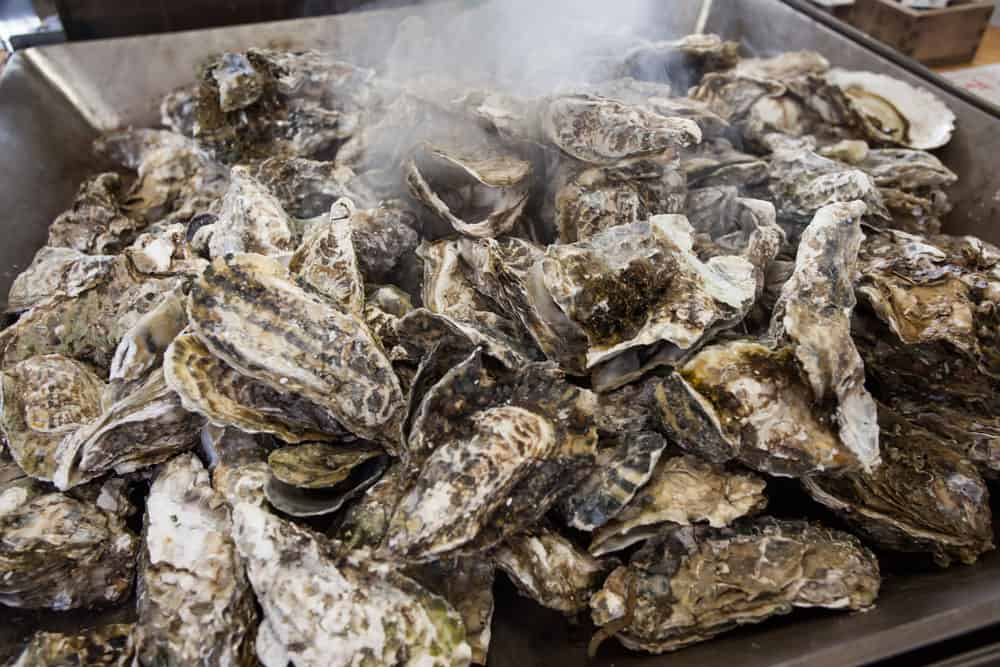 Oyster Roast with possible chili cook off